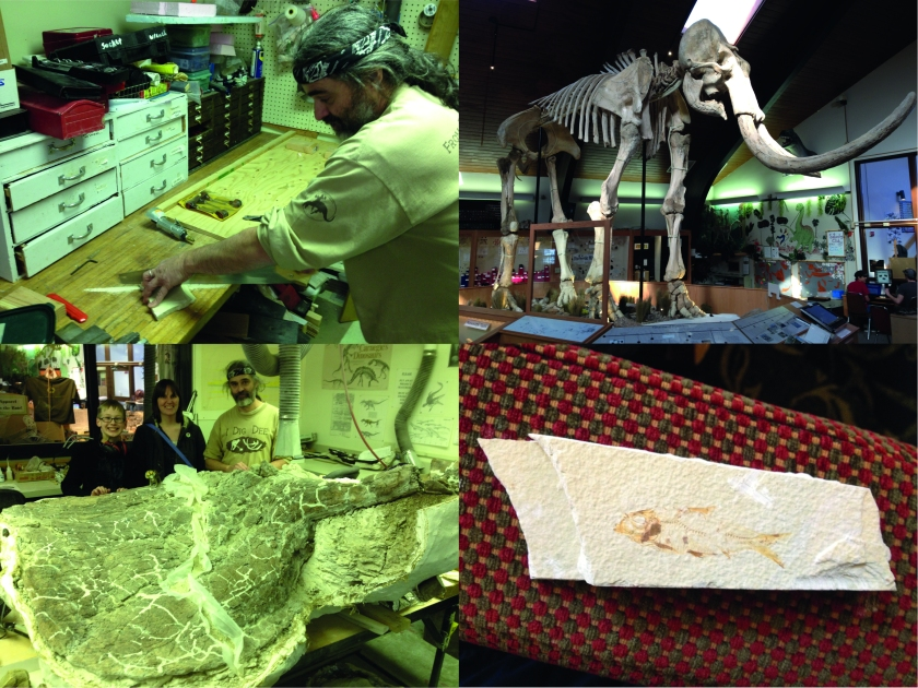 Bottom-left: Matthew, Marion and JP stand proudly behind the triceratops skull (or 'frill', to be exact). Top-left: JP hard at work cutting out my fossil fish from a slab of the Green River Fm. Top-right: Dee the Mammoth. Bottom-right: My own fossil fish!