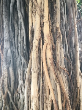 Wonderous roots